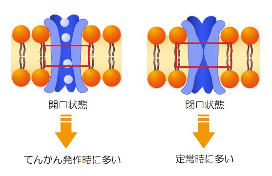 てんかん発作時のAMPA受容体の状態