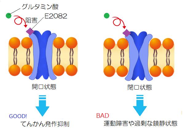 AMPA受容体の開口状態と閉口状態の阻害